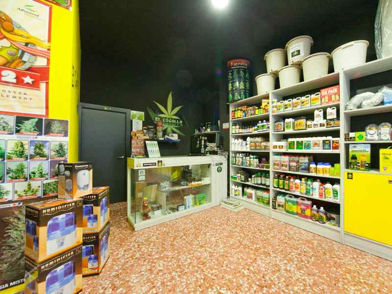 growshop - vendita di cannabis