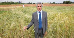 barilla investe in sostenibilità