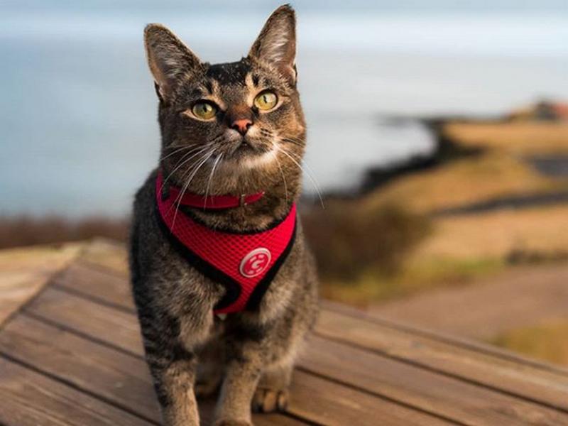 La nuova star del web? Il gatto assunto in hotel