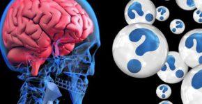 Il cervello apprende e gli occhi lo dimostrano