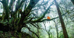 Forest Therapy, alla scoperta di questa pratica Giapponese